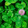 Photos: 緑の中に