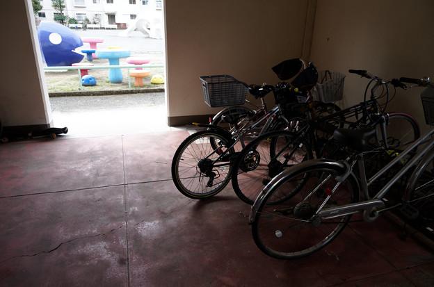 魚と自転車