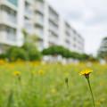 Photos: 団地の黄色い花