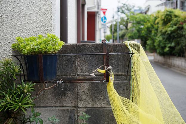 鉢植とネット