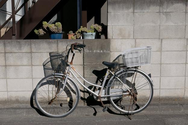 サボテンと自転車