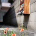 Photos: アパート前
