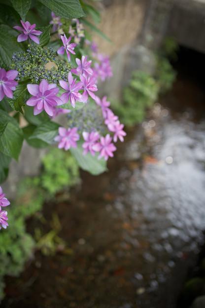 水路に咲く