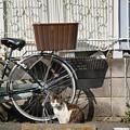 Photos: 駐車場猫