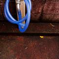 Photos: 青いホース
