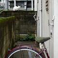 Photos: 塀の猫