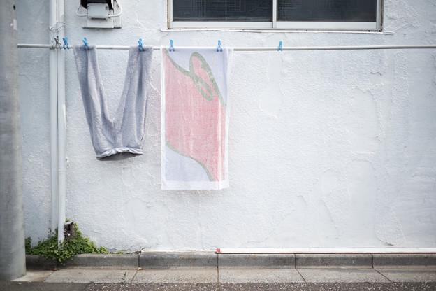 Photos: 洗濯