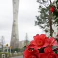 Photos: 花と塔