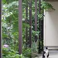 Photos: 廊下の猫