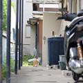 Photos: アパートの猫