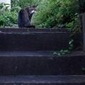 Photos: 階段猫