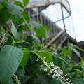 Photos: 小さな花