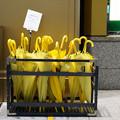 Photos: 黄色い傘