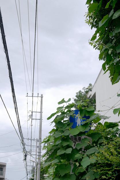 Photos: 緑の中
