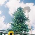 Photos: 給水塔とひまわり
