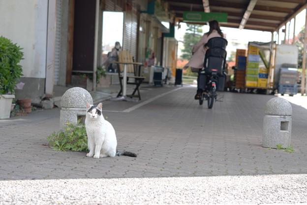スーパー前の猫