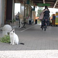 Photos: スーパー前の猫