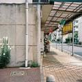百合の咲く街角