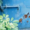 Photos: 青と緑