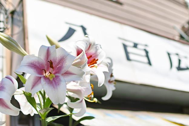 Photos: 百合