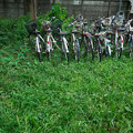 Photos: 草むらの自転車