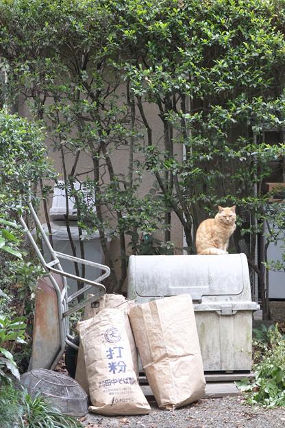 蕎麦屋の猫