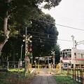 Photos: 参道踏切