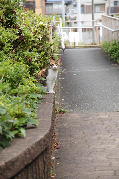 上り坂の猫