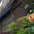 Photos: 花咲く処