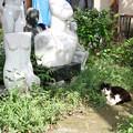 Photos: 猫とアート