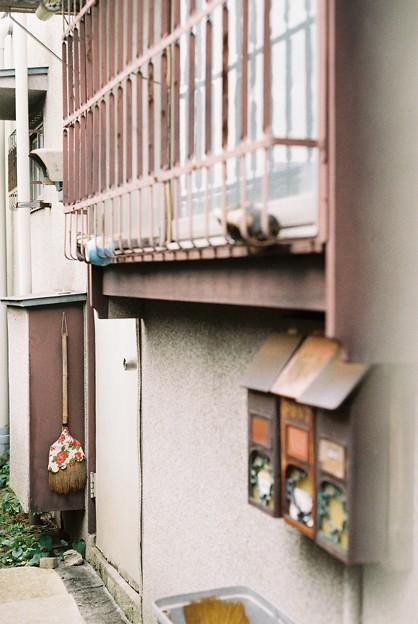 Photos: 花柄