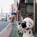 ヘルメット犬