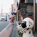 Photos: ヘルメット犬