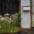 Photos: 花と郵便受け