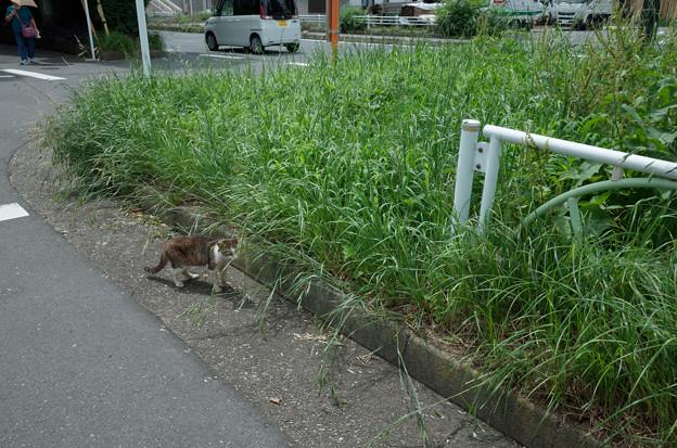 Photos: 猫・草