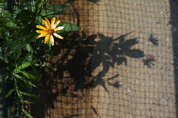 ネット際の花