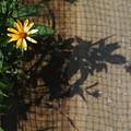 Photos: ネット際の花