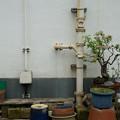 Photos: 盆栽