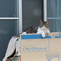 Photos: ミシン猫