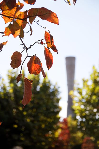 塔と赤い葉