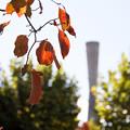 Photos: 塔と赤い葉