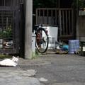 Photos: 野良