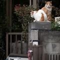 Photos: 2匹の猫