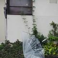 Photos: 壊れた傘