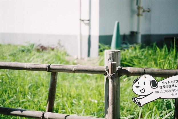 Photos: 笑う犬