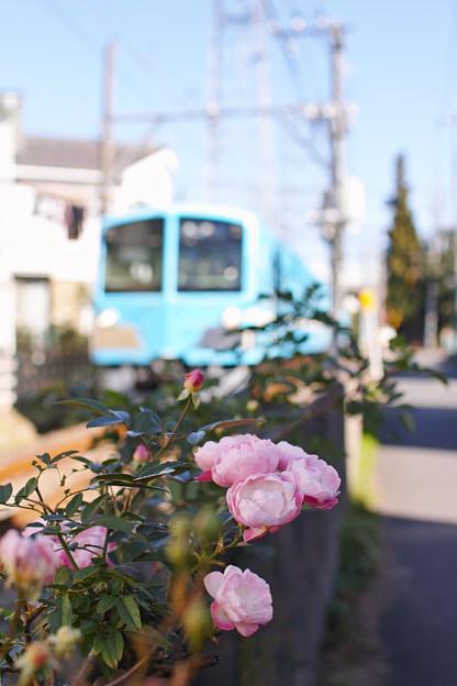 線路沿いの薔薇