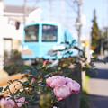 Photos: 線路沿いの薔薇