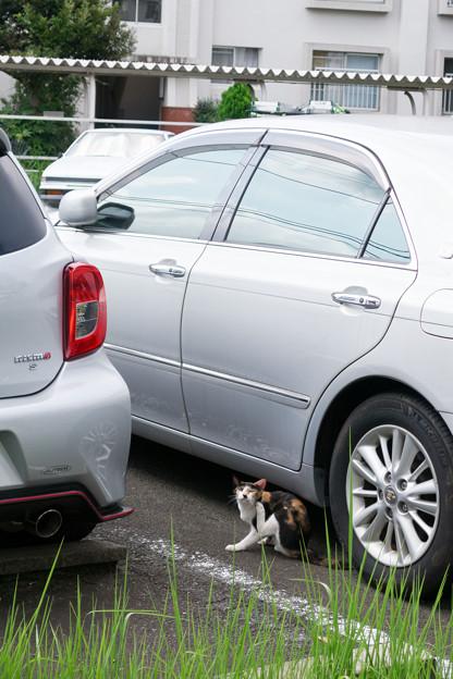 Photos: 駐車場で