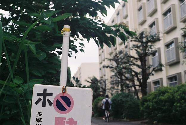 Photos: ホ