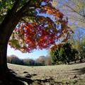 Photos: 紅葉公園